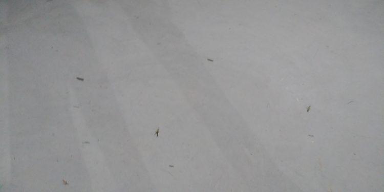スケートパーク内に乱入してくるバッタ